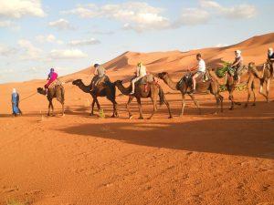Camel Ride in Sahara Desert