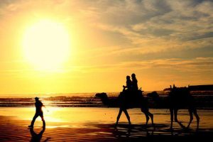 camel trekking by the beach, guided tour