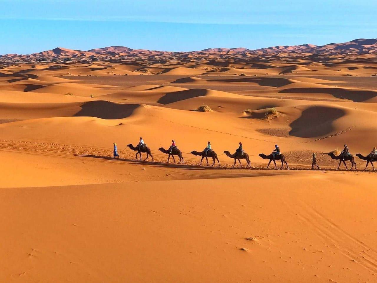 camel trekking in Merzouga desert